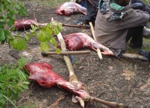 Bushmeat - illegal poaching