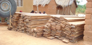 Illegal timber felling